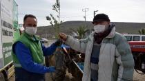 Aliağalı Üreticilere Zeytin Fidanı Dağıtımları Başladı